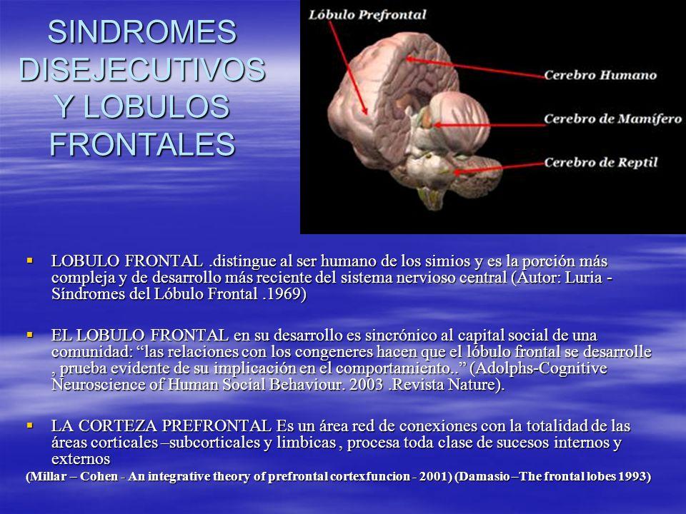 SINDROMES DISEJECUTIVOS Y LOBULOS FRONTALES LOBULO FRONTAL.distingue al ser humano de los simios y es la porción más compleja y de desarrollo más reci