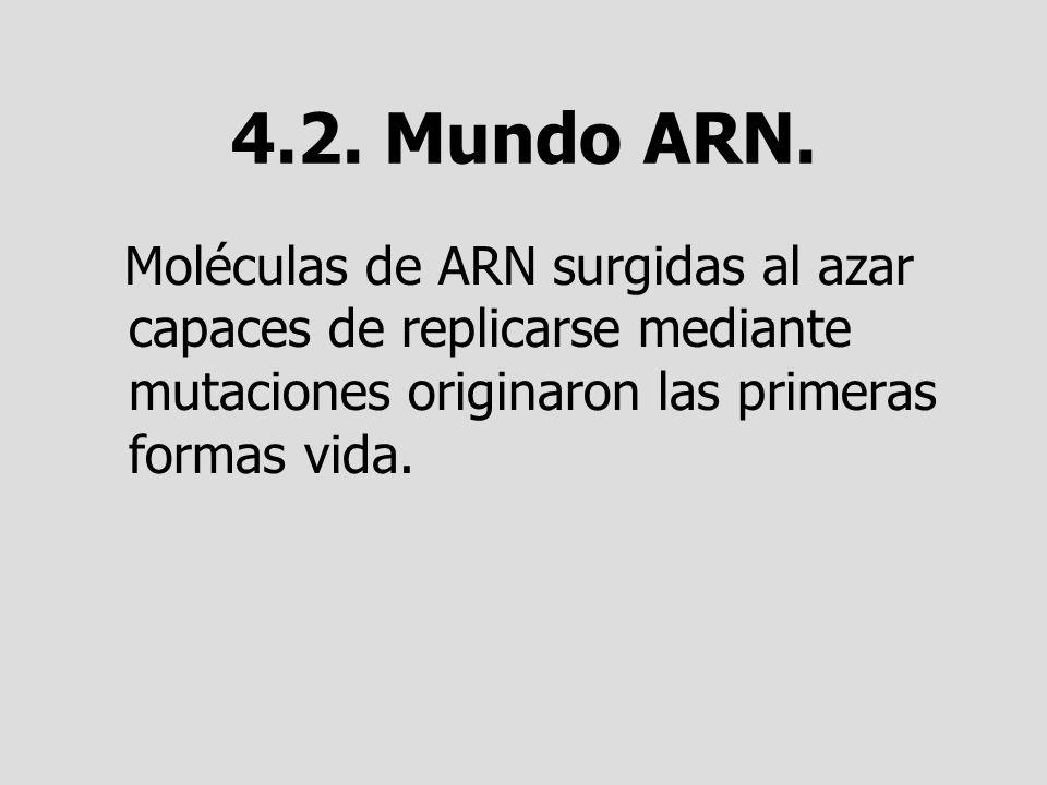 4.2. Mundo ARN. Moléculas de ARN surgidas al azar capaces de replicarse mediante mutaciones originaron las primeras formas vida.