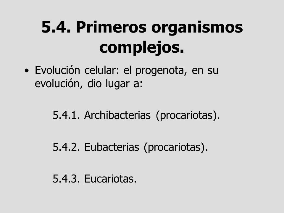 5.4. Primeros organismos complejos. Evolución celular: el progenota, en su evolución, dio lugar a: 5.4.1. Archibacterias (procariotas). 5.4.2. Eubacte