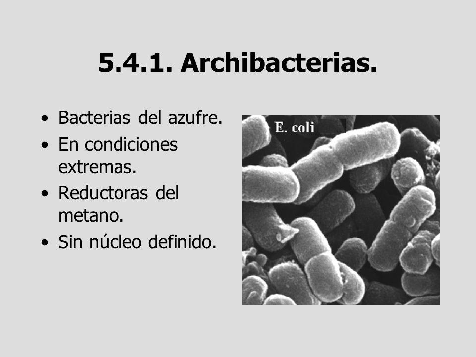 5.4.1. Archibacterias. Bacterias del azufre. En condiciones extremas. Reductoras del metano. Sin núcleo definido.