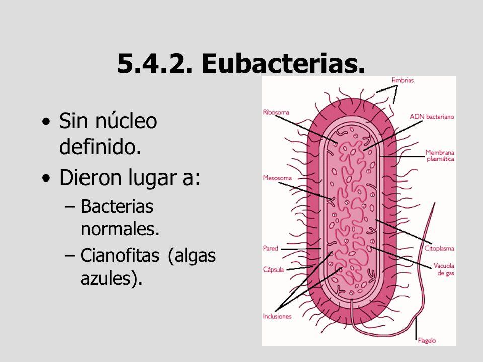 5.4.2. Eubacterias. Sin núcleo definido. Dieron lugar a: –Bacterias normales. –Cianofitas (algas azules).