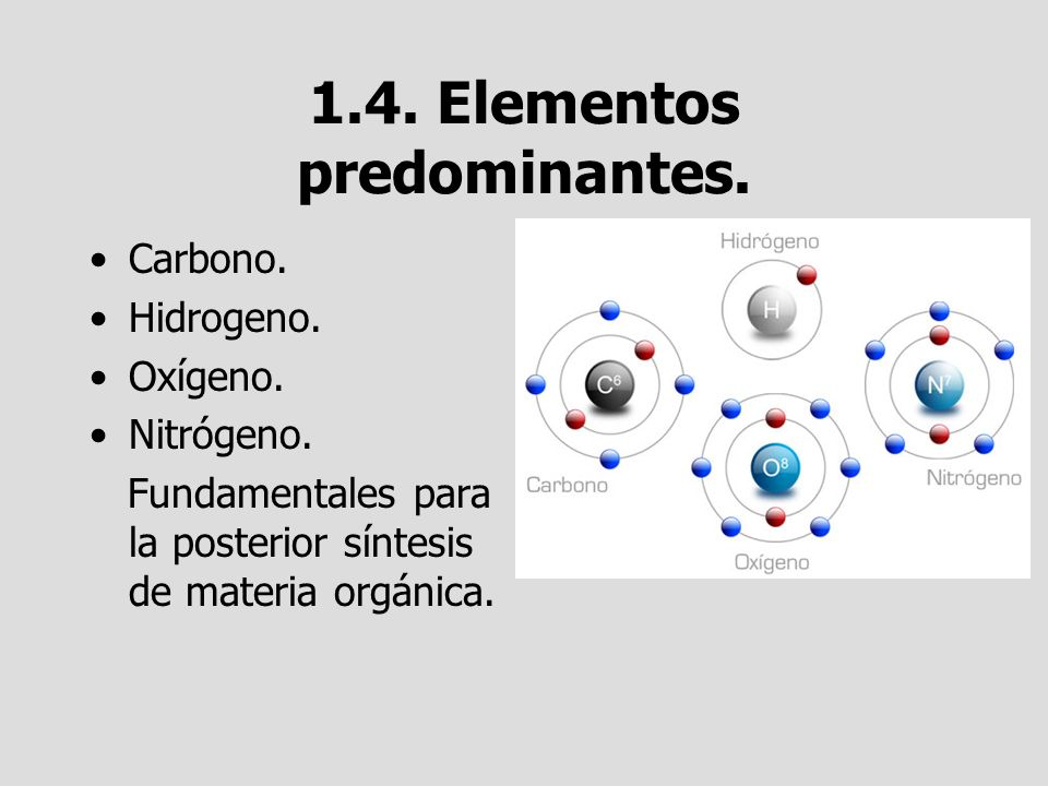 1.4. Elementos predominantes. Carbono. Hidrogeno. Oxígeno. Nitrógeno. Fundamentales para la posterior síntesis de materia orgánica.