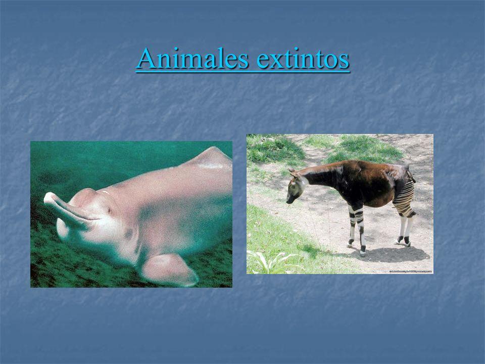 Animales extintos Animales extintos