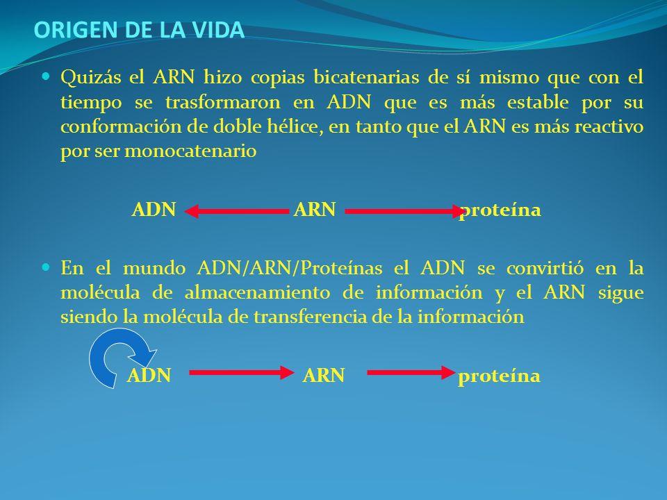 CARACTERISITICAS DE LAS CELULAS PROCARIOTICAS Y EUCARIOTICAS CARACTERISTICAPROCARIOTEEUCARIOTE Tamaño de la célulaPequeño 0.5-2.0 umMayor 2-200 um Cuerpo nuclearSin membrana nuclear, sin mitosis Núcleo verdadero, membrana nuclear, mitosis DNAMolécula única; no en cromosomas Algunos o muchos cromosomas OrganelosNingunoMitocondrias, cloroplastos, vacuolas, otros Pared celularRelativamente delgada, péptidoglucano Gruesa o ausente, diferente químicamente Forma de movimiento Flagelos de tamaño submicroscópico, fibra única de proteína Flagelos o cilios de tamaño microscópico, patrón complejo de fibras