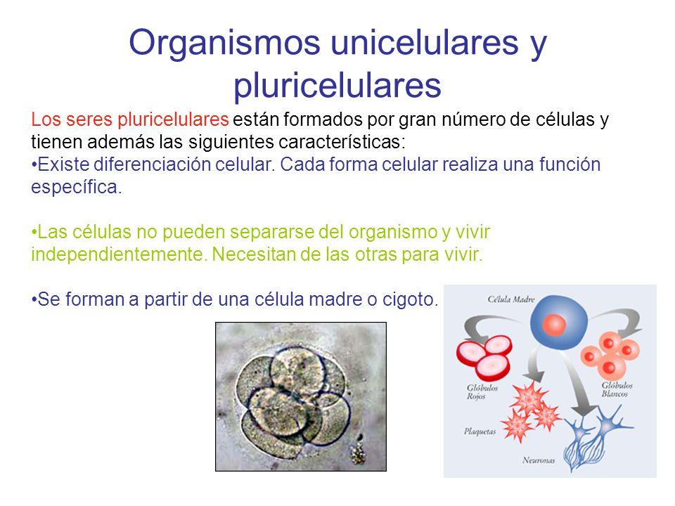 Organismos unicelulares y pluricelulares Los seres pluricelulares están formados por gran número de células y tienen además las siguientes característ