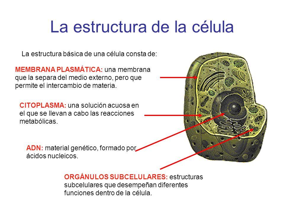 La estructura de la célula MEMBRANA PLASMÁTICA: una membrana que la separa del medio externo, pero que permite el intercambio de materia. La estructur