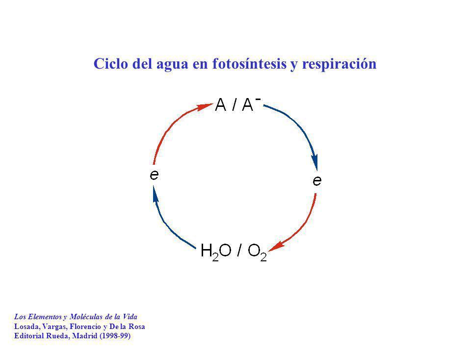 Ciclo del agua en fotosíntesis y respiración Los Elementos y Moléculas de la Vida Losada, Vargas, Florencio y De la Rosa Editorial Rueda, Madrid (1998-99)