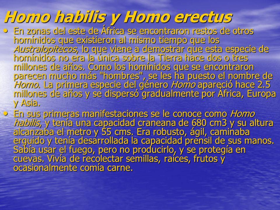Homo habilis y Homo erectus En zonas del este de África se encontraron restos de otros homínidos que existieron al mismo tiempo que los Australopiteco