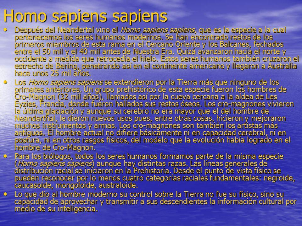 Homo sapiens sapiens Después del Neandertal vino el Homo sapiens sapiens, que es la especie a la cual pertenecemos los seres humanos modernos. Se han