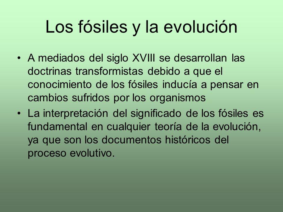 Los fósiles y la evolución A mediados del siglo XVIII se desarrollan las doctrinas transformistas debido a que el conocimiento de los fósiles inducía