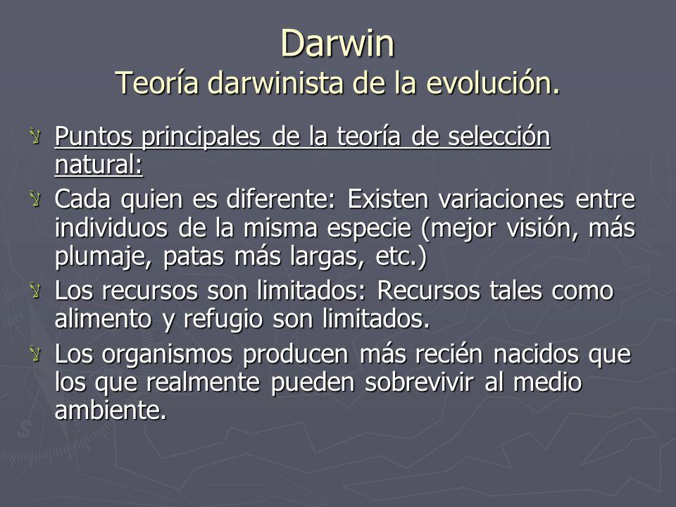 Darwin Teoría darwinista de la evolución. Puntos principales de la teoría de selección natural: Puntos principales de la teoría de selección natural: