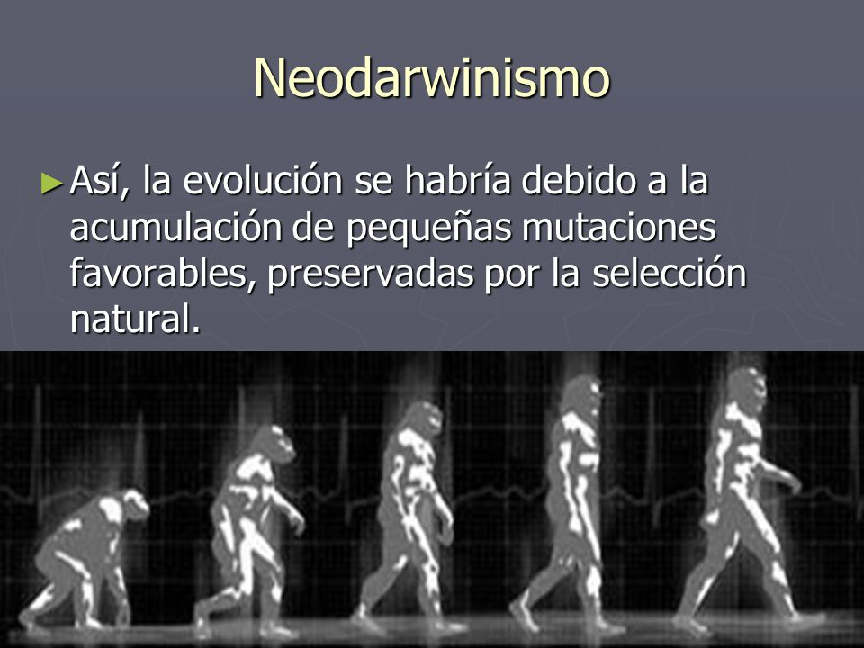 Neodarwinismo Así, la evolución se habría debido a la acumulación de pequeñas mutaciones favorables, preservadas por la selección natural. Así, la evo