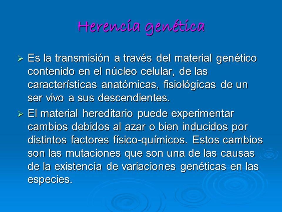 Herencia genética Es la transmisión a través del material genético contenido en el núcleo celular, de las características anatómicas, fisiológicas de