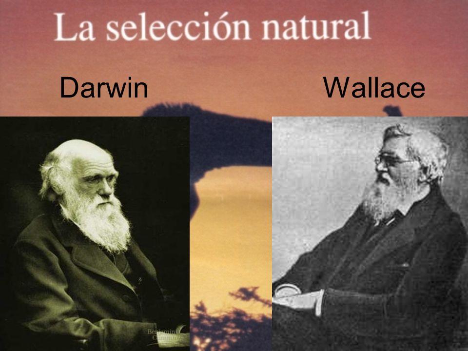 Darwin Wallace