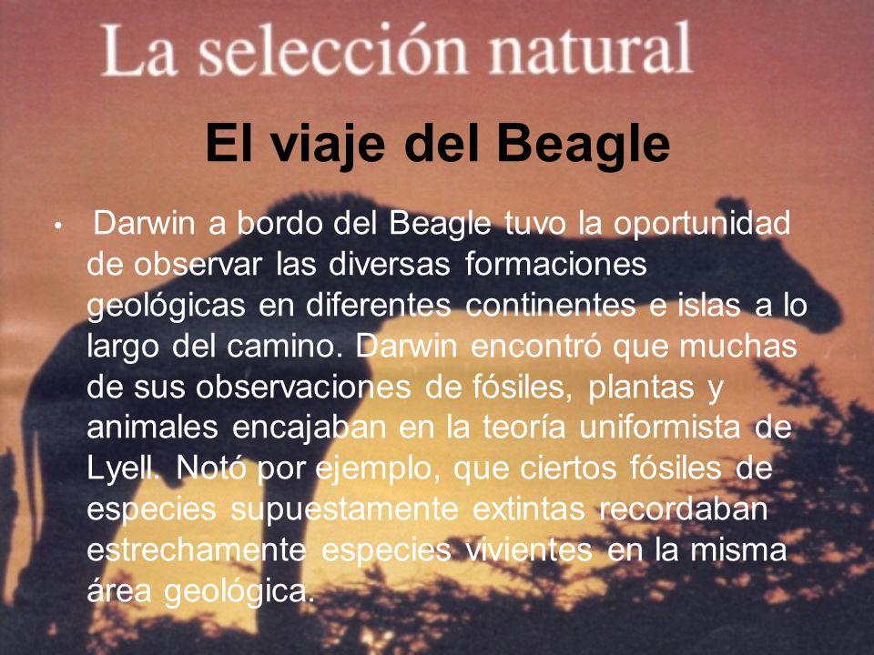 El viaje del Beagle Darwin a bordo del Beagle tuvo la oportunidad de observar las diversas formaciones geológicas en diferentes continentes e islas a