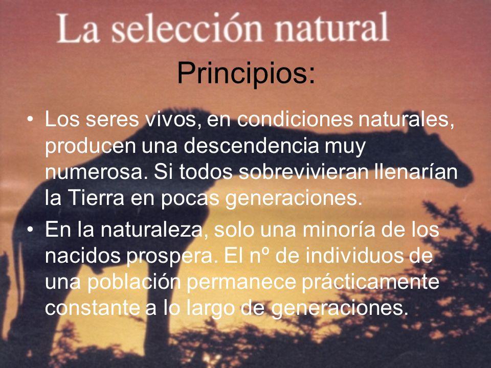 Principios: Los seres vivos, en condiciones naturales, producen una descendencia muy numerosa. Si todos sobrevivieran llenarían la Tierra en pocas gen