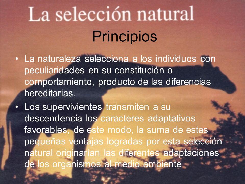 Principios La naturaleza selecciona a los individuos con peculiaridades en su constitución o comportamiento, producto de las diferencias hereditarias.