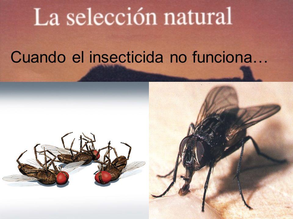 Cuando el insecticida no funciona…