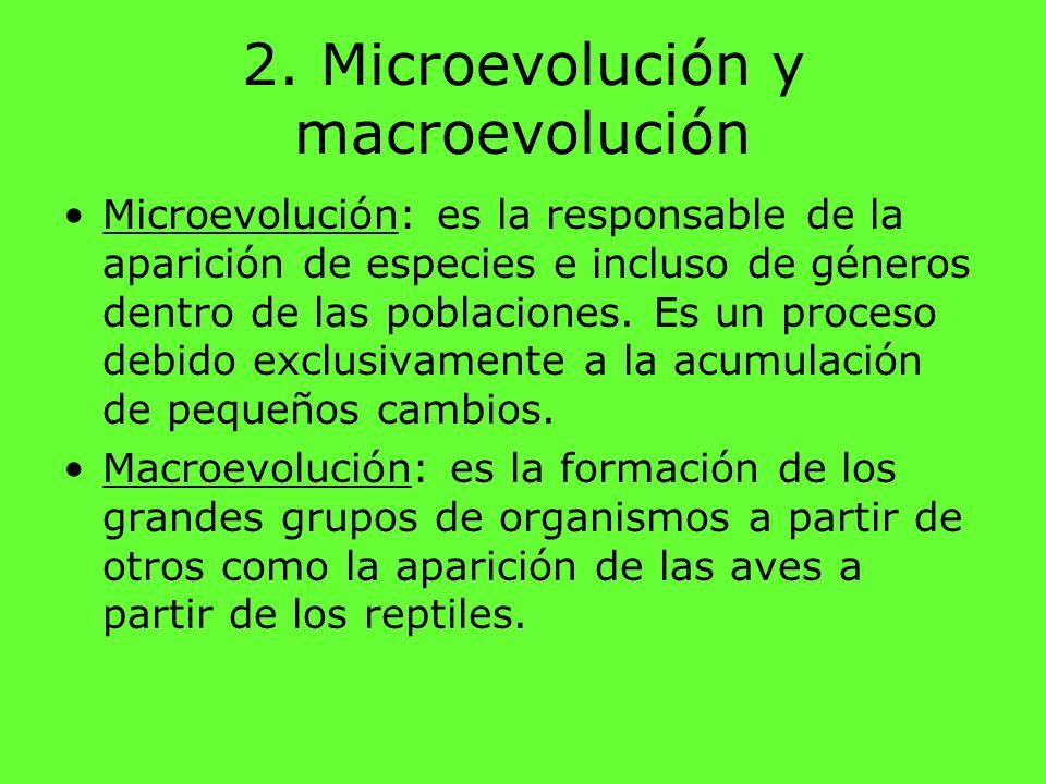 2. Microevolución y macroevolución Microevolución: es la responsable de la aparición de especies e incluso de géneros dentro de las poblaciones. Es un