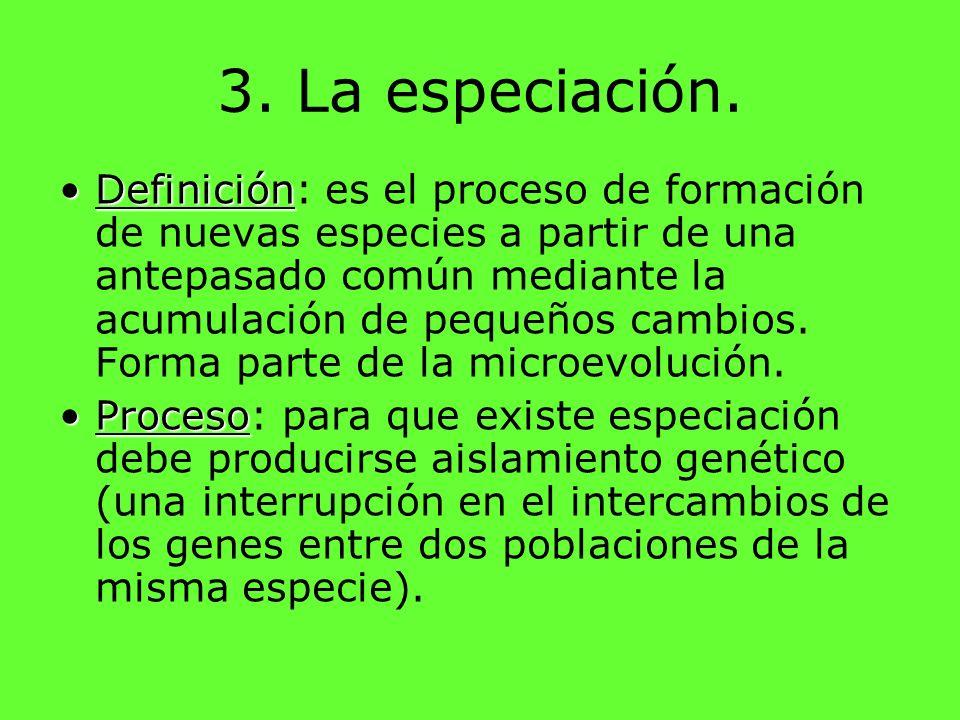 3. La especiación. DefiniciónDefinición: es el proceso de formación de nuevas especies a partir de una antepasado común mediante la acumulación de peq