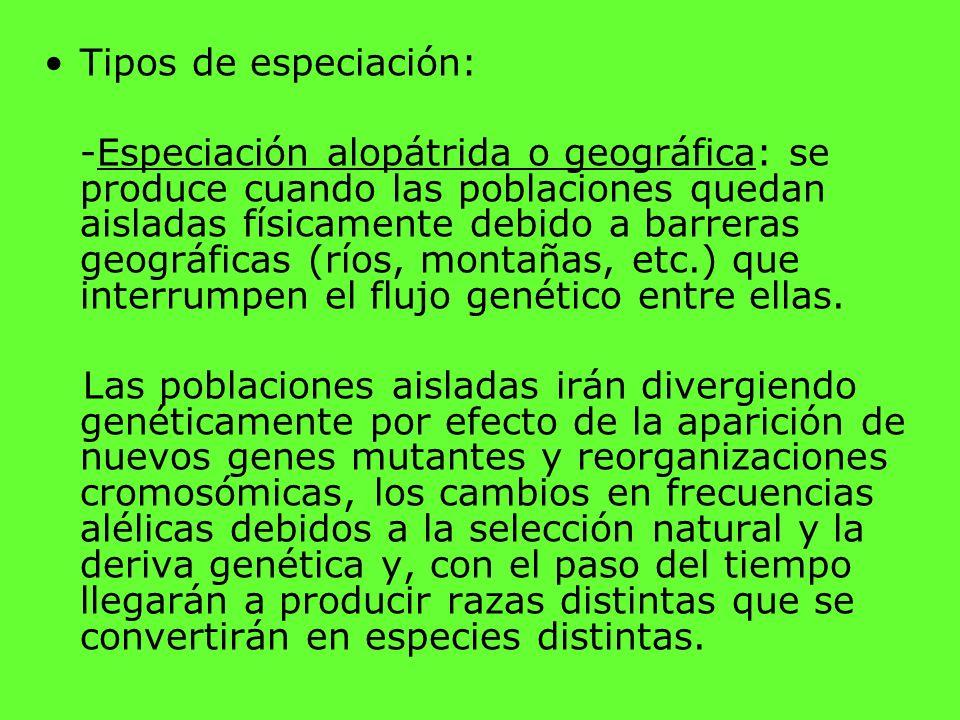 Tipos de especiación: -Especiación alopátrida o geográfica: se produce cuando las poblaciones quedan aisladas físicamente debido a barreras geográfica