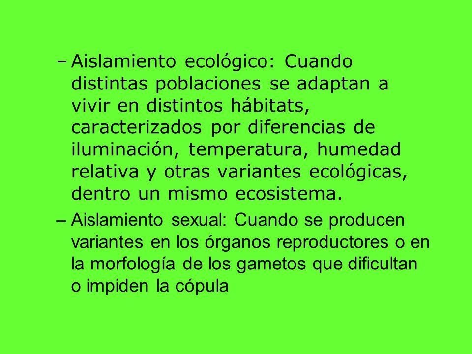 –Aislamiento ecológico: Cuando distintas poblaciones se adaptan a vivir en distintos hábitats, caracterizados por diferencias de iluminación, temperat