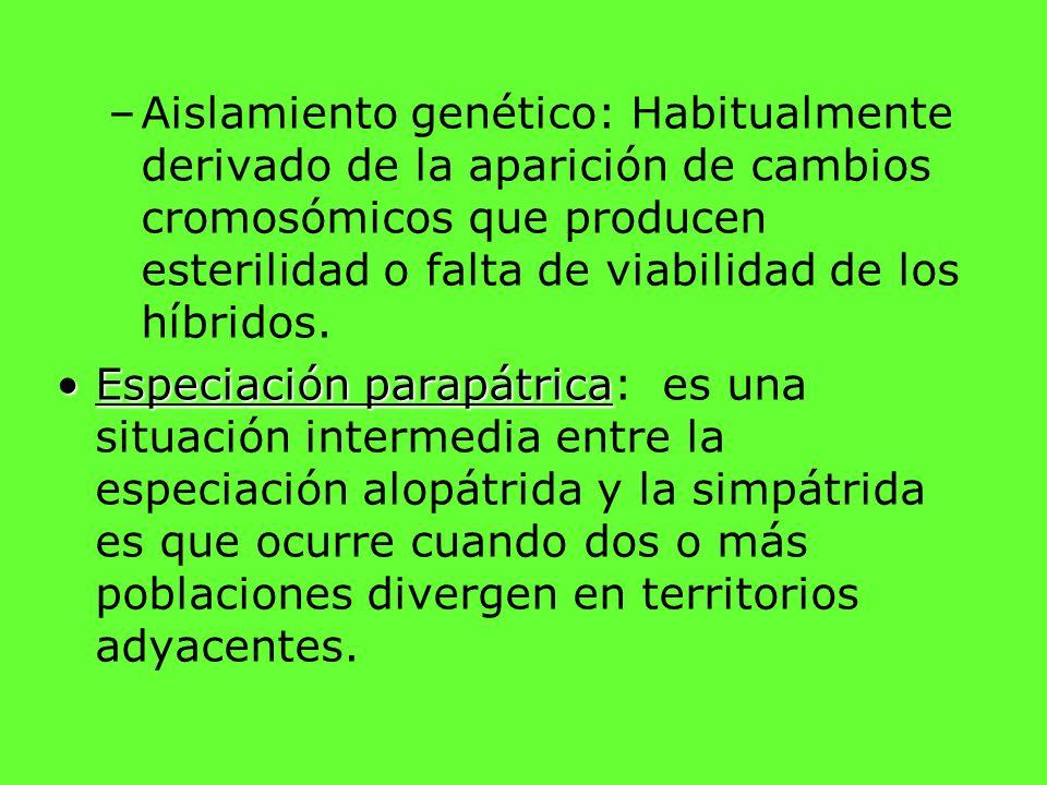 –Aislamiento genético: Habitualmente derivado de la aparición de cambios cromosómicos que producen esterilidad o falta de viabilidad de los híbridos.
