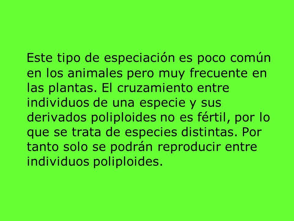 Este tipo de especiación es poco común en los animales pero muy frecuente en las plantas. El cruzamiento entre individuos de una especie y sus derivad