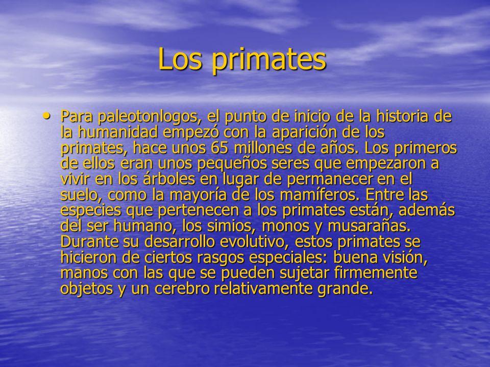 Los primates Para paleotonlogos, el punto de inicio de la historia de la humanidad empezó con la aparición de los primates, hace unos 65 millones de a