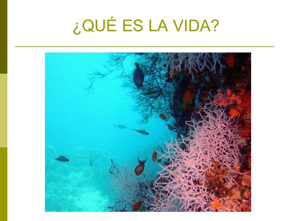 SUMARIO El estudio de la vida Origen de los seres vivos ¿Qué es la vida.