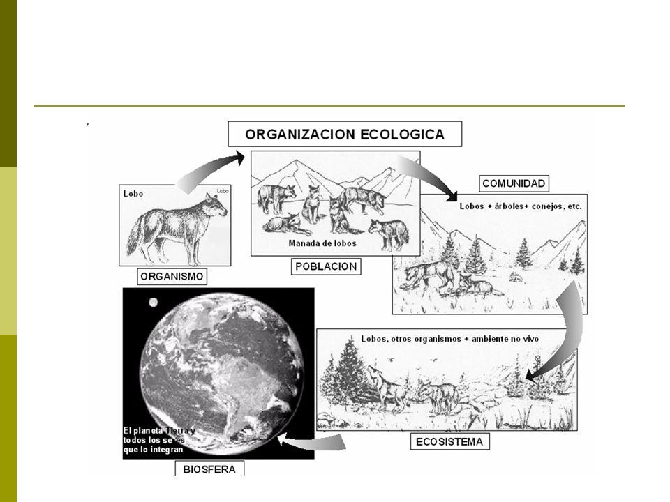 El término Ökologie está compuesto por las palabras griegas oikos (casa, vivienda, hogar) y logos (estudio o tratado), por ello Ecología significa el estudio de los hogares .