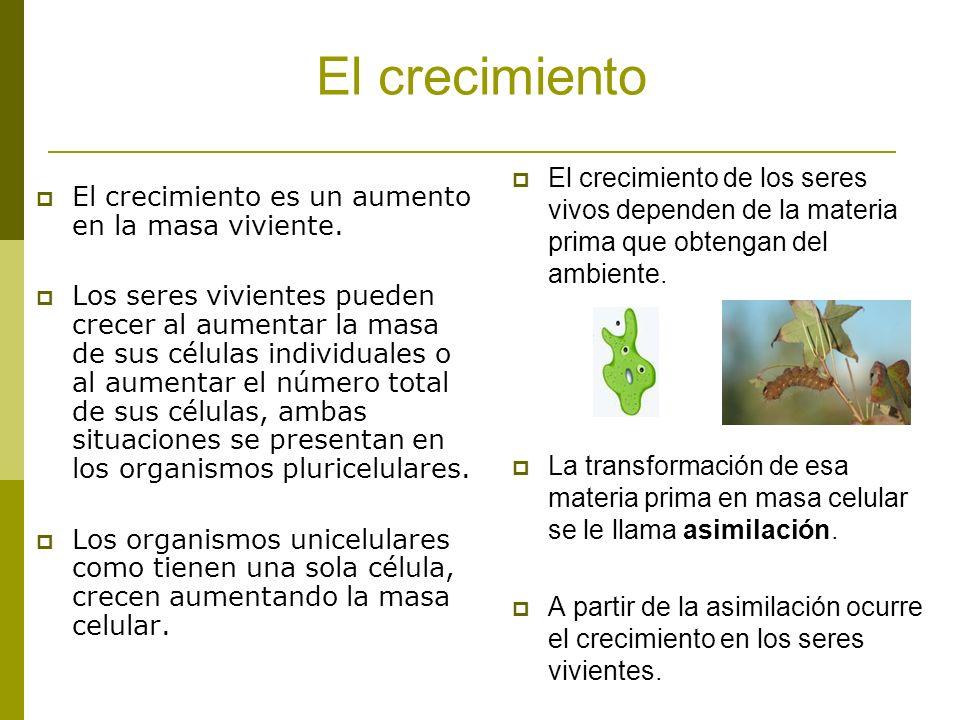 La reproducción La reproducción es el proceso mediante el cual se producen nuevos individuos.