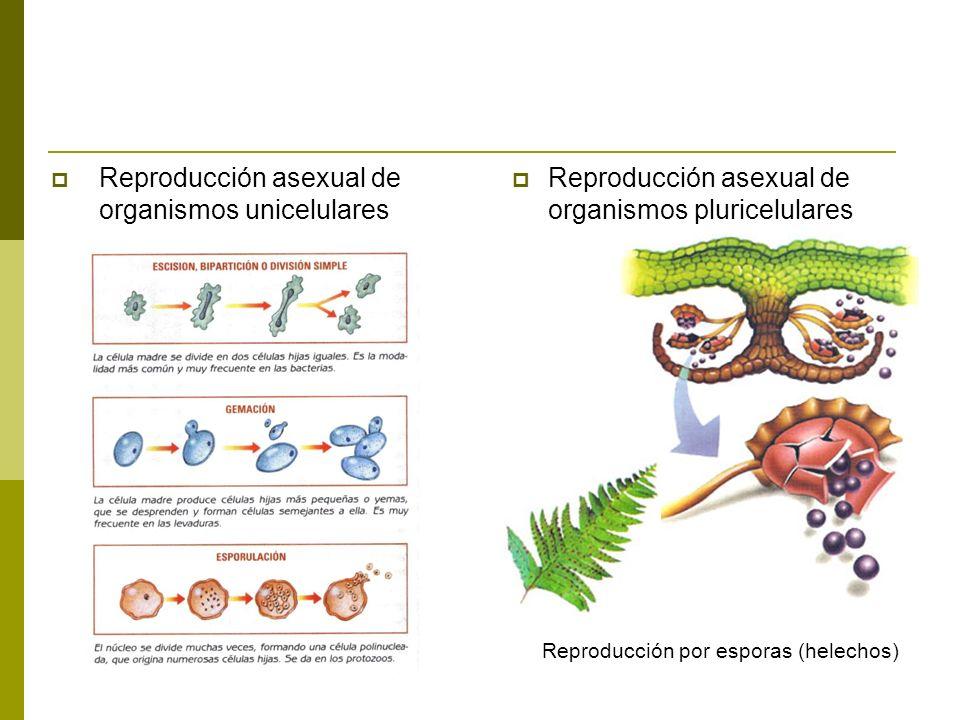 Reproducción sexual con dos progenitores Reproducción sexual con un solo progenitor