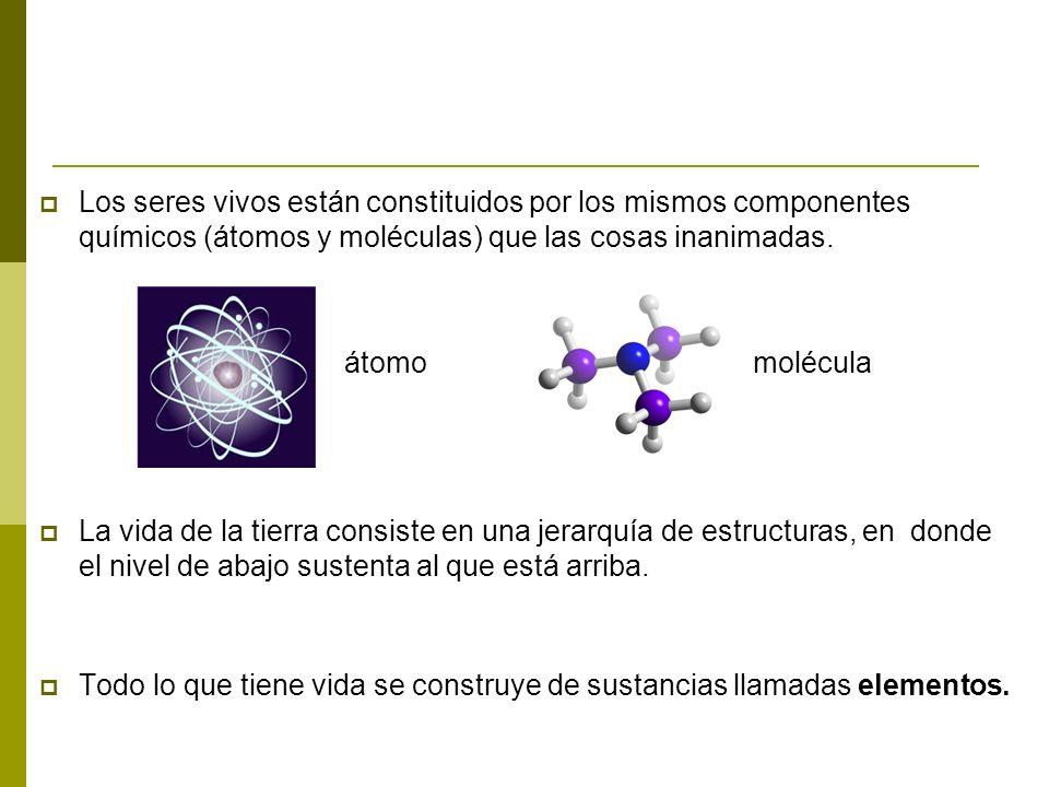 O H H CH 2 OH Partículas atómicas ElectrónNeutrónProtón NitrógenoCarbonoHidrógenoOxígeno ADNGlucosaAgua NúcleoCloroplastoMitocondria Célula Nerviosa Atomo Molécula Organelos Célula Un átomo es la partícula más pequeña de un elemento que conserva las propiedades de dicho elemento.