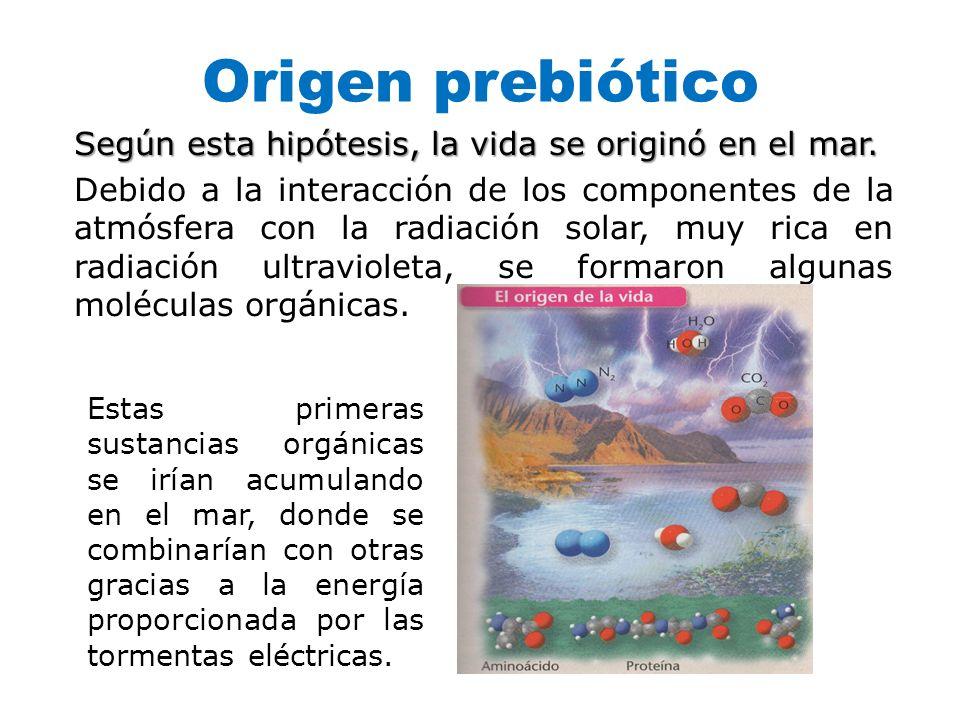 Origen prebiótico Según esta hipótesis, la vida se originó en el mar. Debido a la interacción de los componentes de la atmósfera con la radiación sola