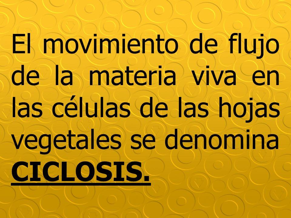 El movimiento de flujo de la materia viva en las células de las hojas vegetales se denomina CICLOSIS.