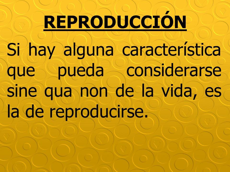 REPRODUCCIÓN Si hay alguna característica que pueda considerarse sine qua non de la vida, es la de reproducirse.