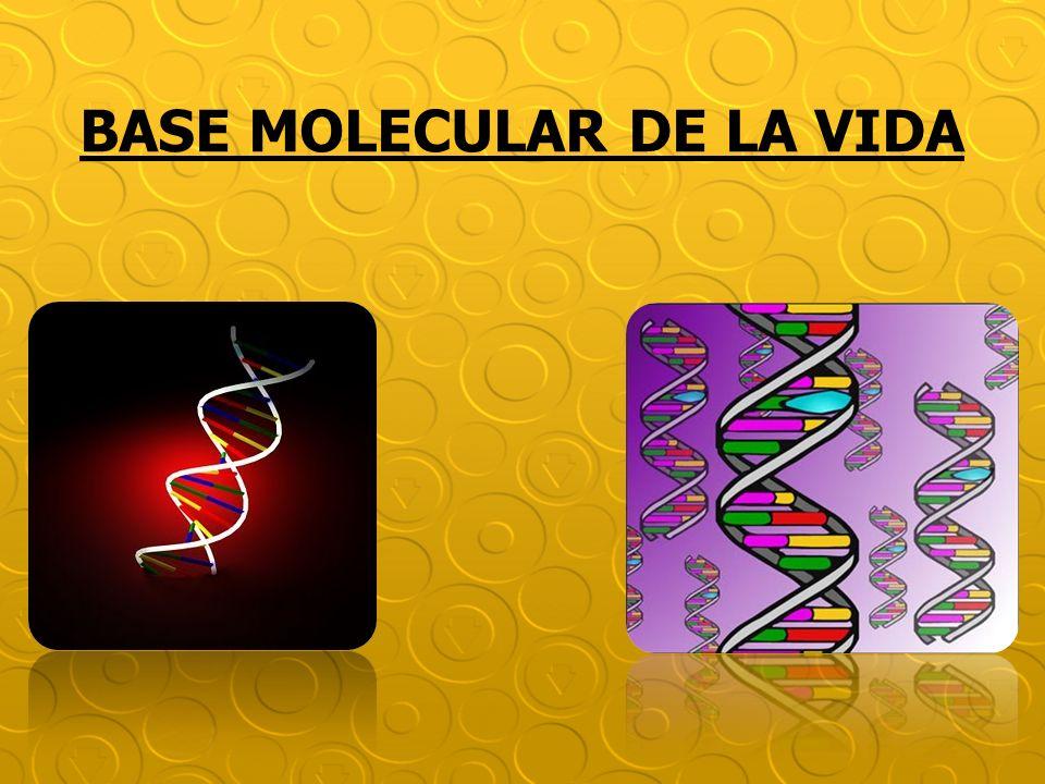Reciben este nombre porque fueron aisladas por primera vez del núcleo de células vivas.