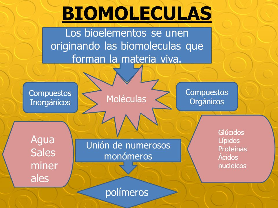 BIOMOLECULAS Los bioelementos se unen originando las biomoleculas que forman la materia viva. Moléculas Compuestos Orgánicos Compuestos Inorgánicos Un