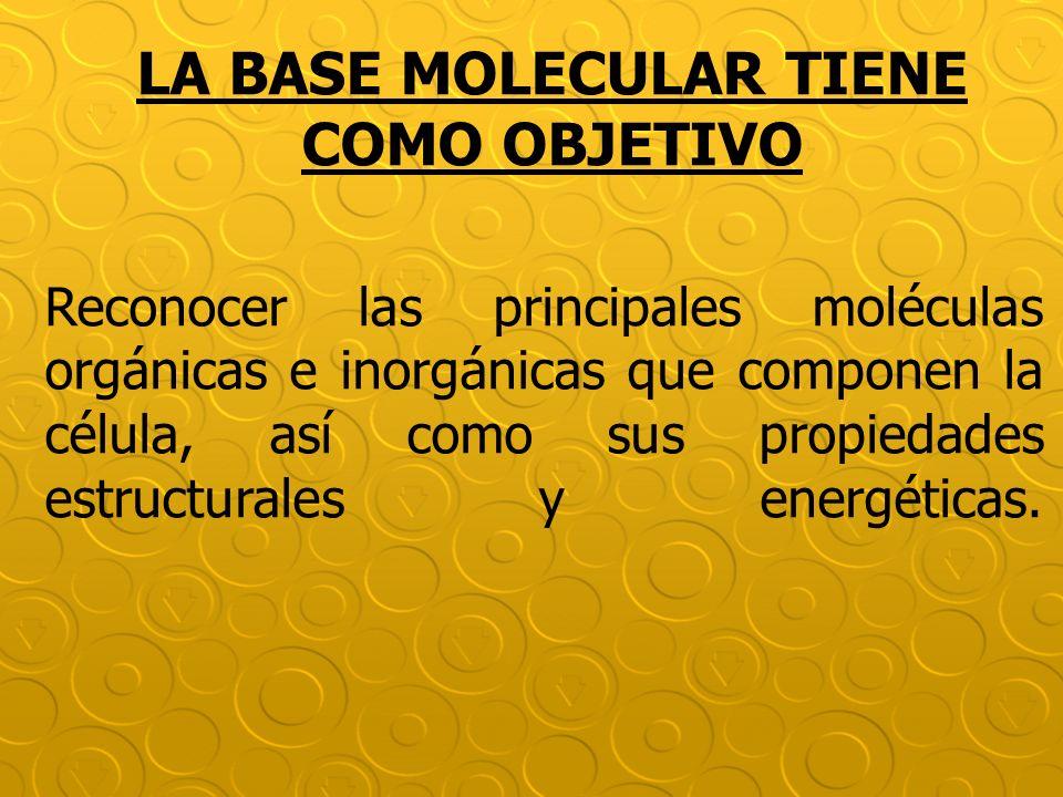 Reconocer las principales moléculas orgánicas e inorgánicas que componen la célula, así como sus propiedades estructurales y energéticas. LA BASE MOLE