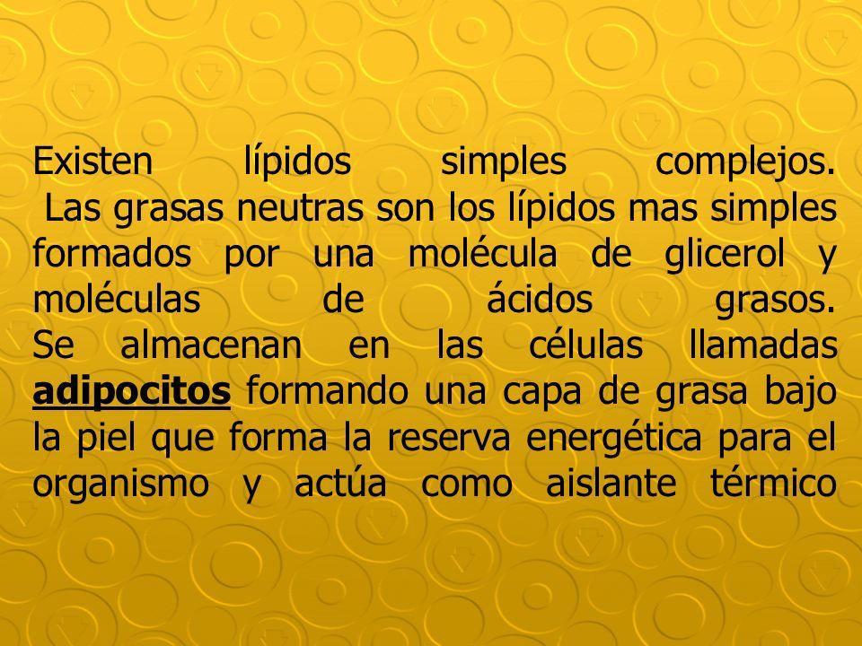 Existen lípidos simples complejos. Las grasas neutras son los lípidos mas simples formados por una molécula de glicerol y moléculas de ácidos grasos.
