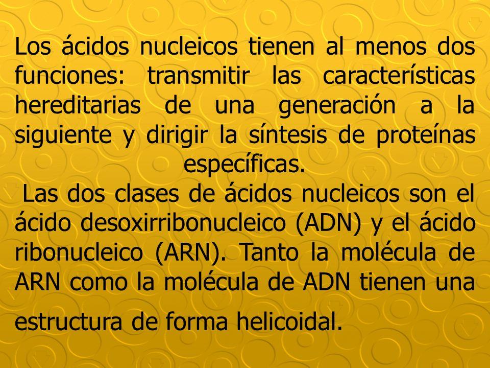 Los ácidos nucleicos tienen al menos dos funciones: transmitir las características hereditarias de una generación a la siguiente y dirigir la síntesis