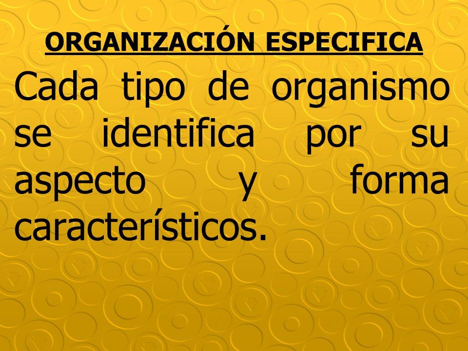 ORGANIZACIÓN ESPECIFICA Cada tipo de organismo se identifica por su aspecto y forma característicos.