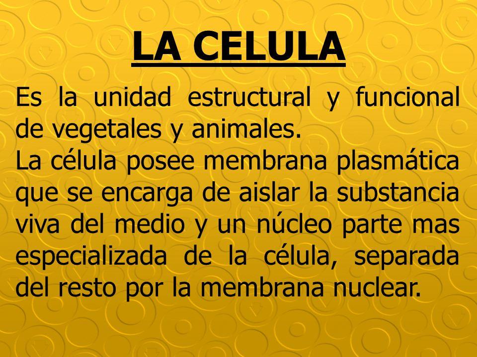 LA CELULA Es la unidad estructural y funcional de vegetales y animales. La célula posee membrana plasmática que se encarga de aislar la substancia viv