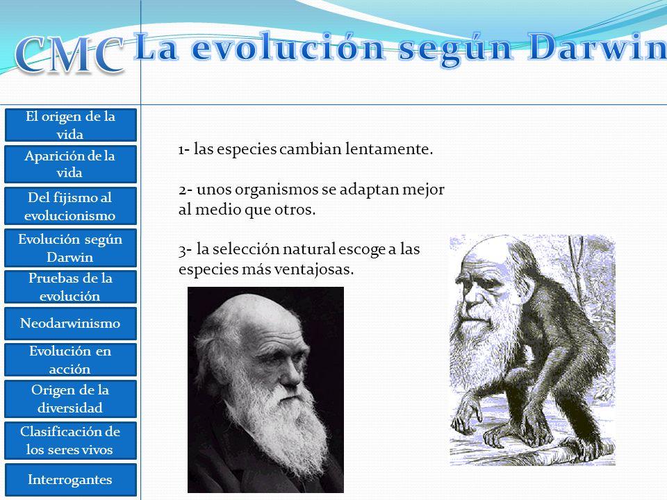 El origen de la vida Aparición de la vida Del fijismo al evolucionismo Evolución según Darwin Pruebas de la evolución Neodarwinismo Evolución en acción Origen de la diversidad Clasificación de los seres vivos Interrogantes 1- las especies cambian lentamente.