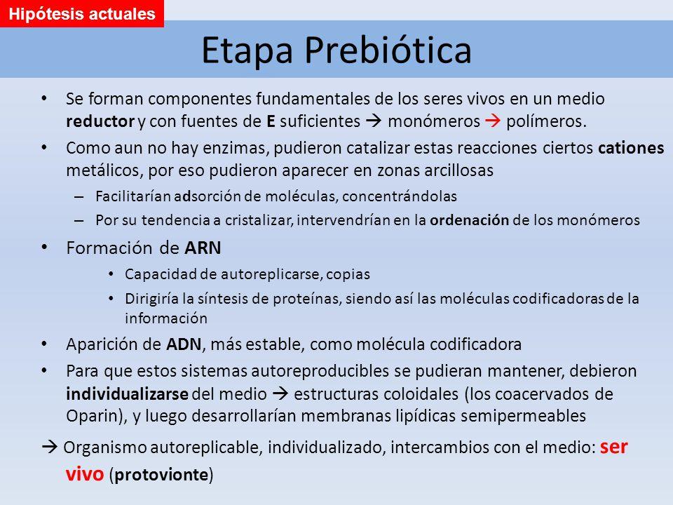 Etapa Prebiótica Se forman componentes fundamentales de los seres vivos en un medio reductor y con fuentes de E suficientes monómeros polímeros. Como