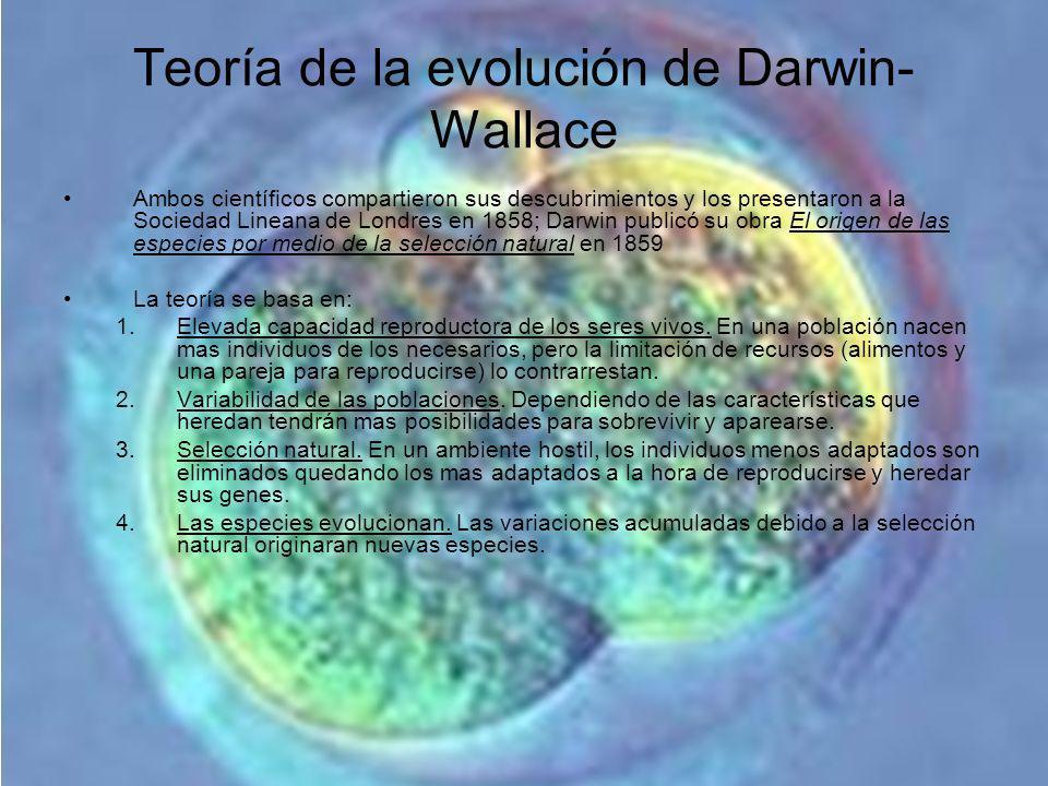 Teoría de la evolución de Darwin- Wallace Ambos científicos compartieron sus descubrimientos y los presentaron a la Sociedad Lineana de Londres en 185
