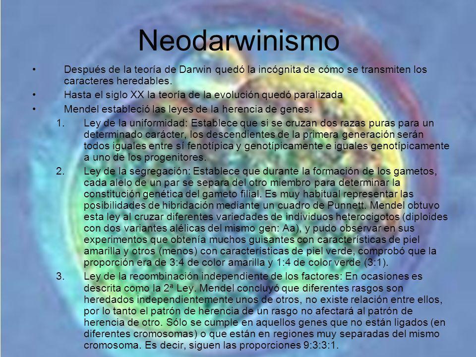 Neodarwinismo Después de la teoría de Darwin quedó la incógnita de cómo se transmiten los caracteres heredables. Hasta el siglo XX la teoría de la evo
