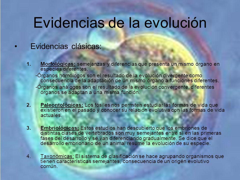 Evidencias de la evolución Evidencias clásicas: 1.Morfológicas: semejanzas y diferencias que presenta un mismo órgano en especies diferentes. -Órganos