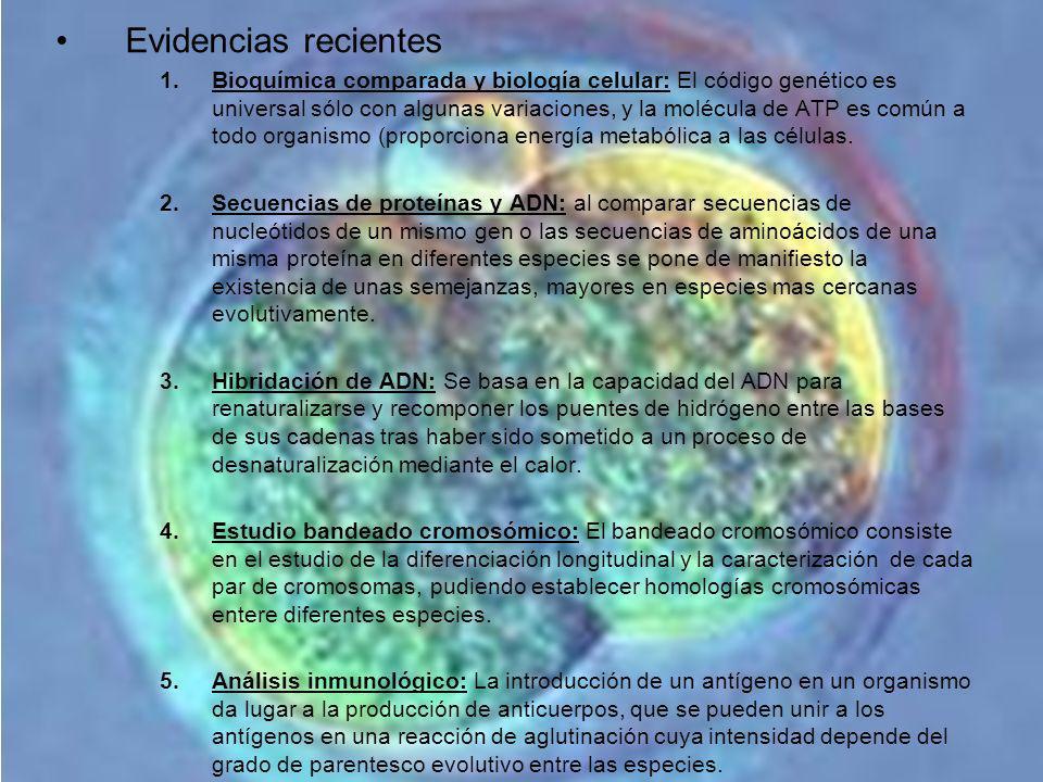 Evidencias recientes 1.Bioquímica comparada y biología celular: El código genético es universal sólo con algunas variaciones, y la molécula de ATP es